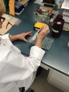 ICIA PCR Test